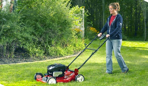 Động cơ máy cắt cỏ tiêu chuẩn
